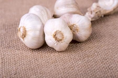 jute sack: immagine di aglio fresco sul sacco di iuta