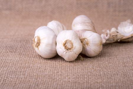 sacco juta: immagine di aglio fresco sul sacco di iuta