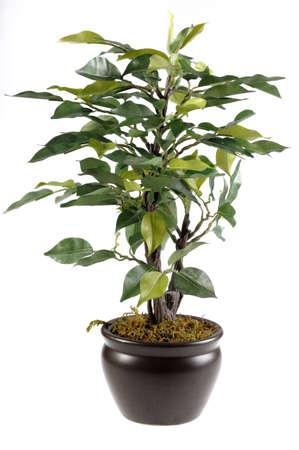 Green Flower in white Standard-Bild
