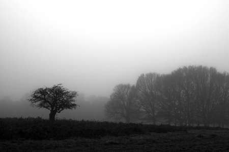 The fog at the forest in a morning