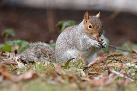 To feed a squirrel to take a nut  Standard-Bild