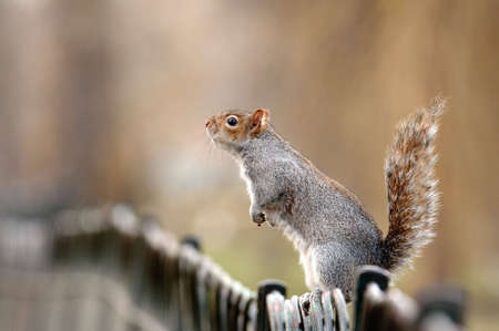 To feed a squirrel to take a nut Stock Photo - 6517406