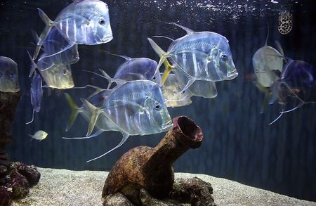 fish among the amphora on the sandy bottom of the ocean photo