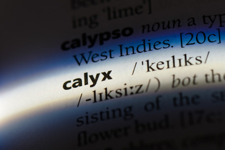 calyx word in a dictionary. calyx concept. Stock Photo