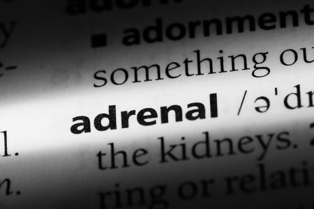 adrenal word in a dictionary. adrenal concept.