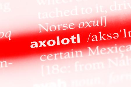 axolotl word in a dictionary. axolotl concept. Stock Photo - 99602026