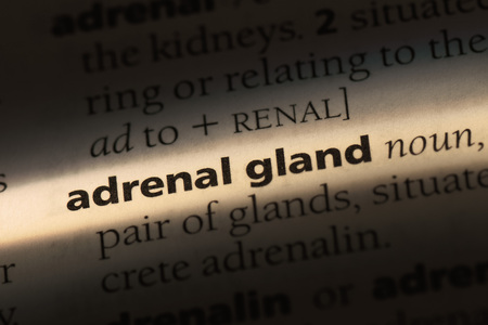 adrenal gland word in a dictionary. adrenal gland concept.