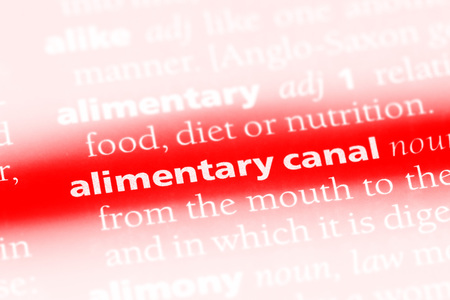 alimentary canal word in a dictionary. alimentary canal concept. Stock Photo