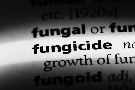 fungicide word in a dictionary. fungicide concept