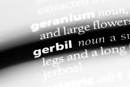gerbil word in a dictionary. gerbil concept