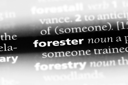 forester word in a dictionary. forester concept