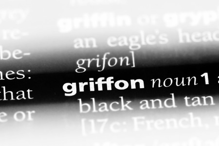 griffon word in a dictionary. griffon concept