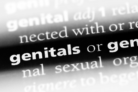 genitals word in a dictionary. genitals concept Stock Photo