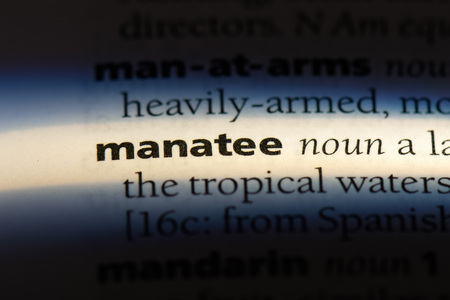 manatee word in a dictionary. manatee concept.