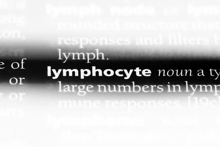 lymphocyte word in a dictionary. lymphocyte concept. Stock Photo