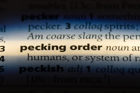 pecking order word in a dictionary. pecking order concept.