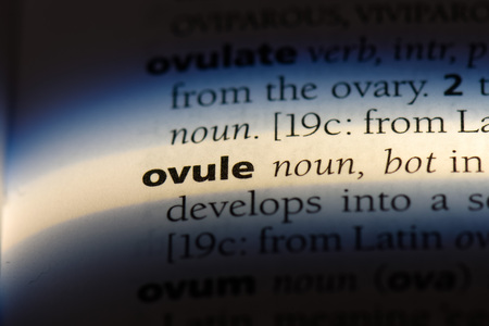 ovule word in a dictionary. ovule concept.