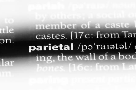 parietal word in a dictionary. parietal concept.