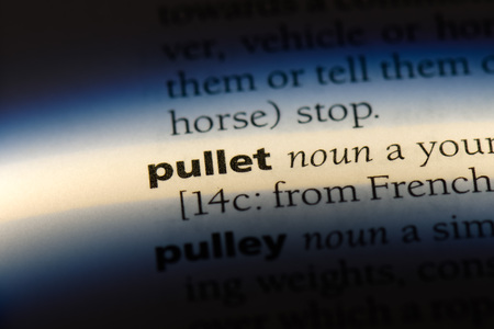 pullet word in a dictionary. pullet concept.