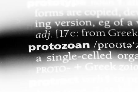 protozoan word in a dictionary. protozoan concept.