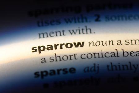 sparrow word in a dictionary. sparrow concept. Stockfoto