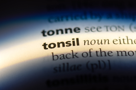 tonsil word in a dictionary. tonsil concept.