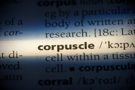 corpuscle word in a dictionary. corpuscle concept, definition. Stock Photo