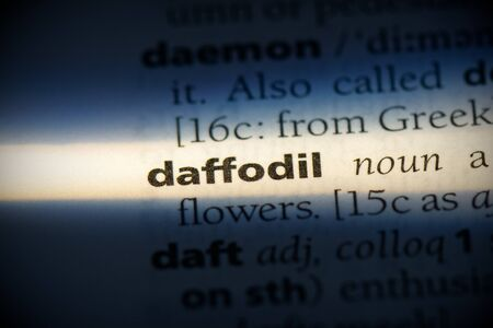 daffodil word in a dictionary. daffodil concept, definition.