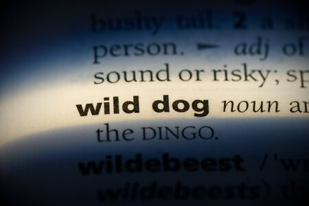 wild dog word in a dictionary. wild dog concept, definition.