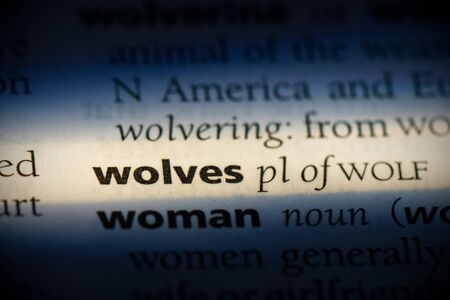 wolves word in a dictionary. wolves concept, definition. 写真素材 - 132117601