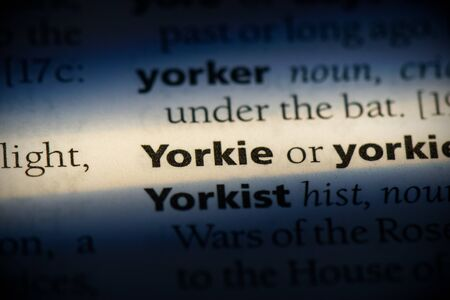yorkie word in a dictionary. yorkie concept, definition.