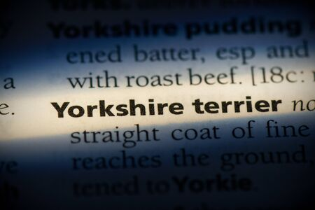 yorkshire terrier word in a dictionary. yorkshire terrier concept, definition. Banco de Imagens