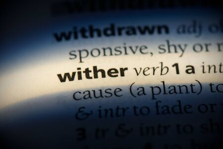wither word in a dictionary. wither concept, definition.