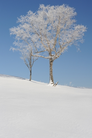 White winter landscape with a snow-clad tree in Hokkaido, Japan photo