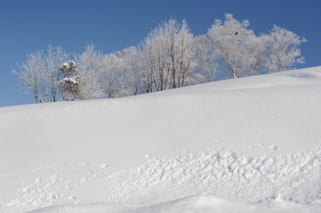 White winter landscape with a snow-covered tree Stock Photo - 16804117