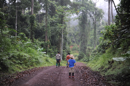 A boy walking in a tropical forest in Danum Valley in Borneo
