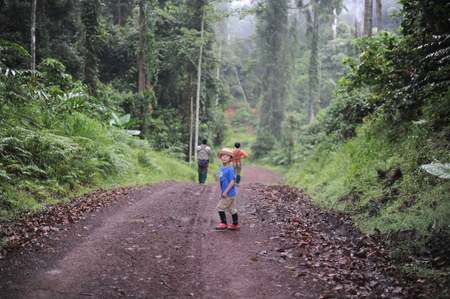 intriguing: A boy walking in a tropical forest in Danum Valley in Borneo