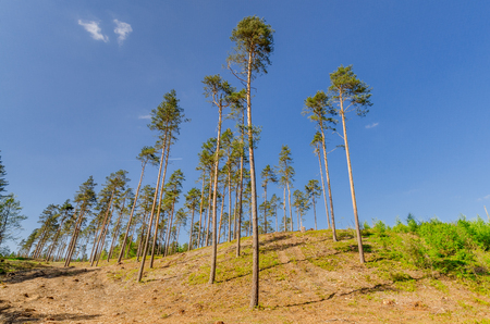Cleared part of a forest. Warmian-masurian province, Poland. 免版税图像