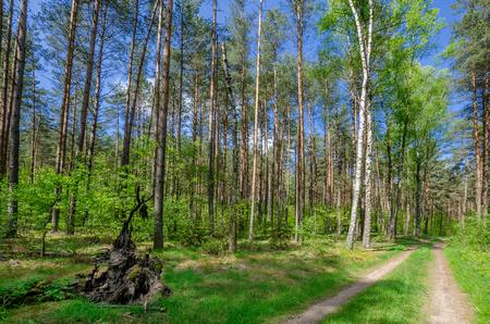 A road in the masurian forest. Town of Olsztynek area, warmian-masurian province, Poland. Zdjęcie Seryjne