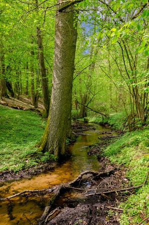 Stream in masurian forest. Historic border between the polish Prince-Bishopric of Warmia and prussian Masuria region. Town of Olsztynek area, Warmian-masurian province, Poland.