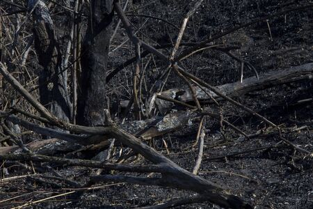 Burned trees, burned forest and grass.