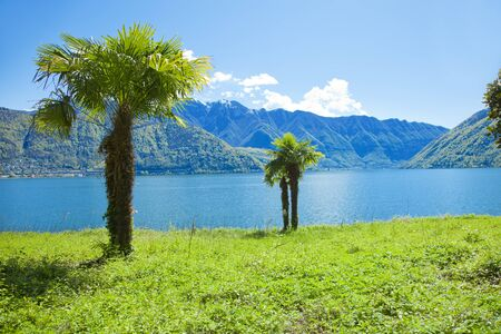 meadowland: palm near the lake in switzerland Stock Photo