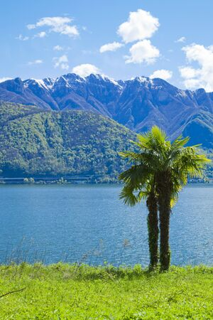 meadowland: palm near the lake in switzerland Stock Photo