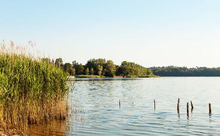 the thicket: landscape, lake and cane thicket in the foreground Stock Photo