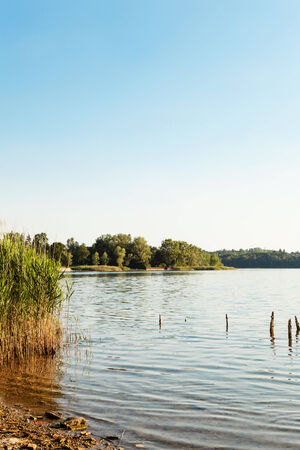the thicket: landscape, lake and cane thicket, view from the shore Stock Photo
