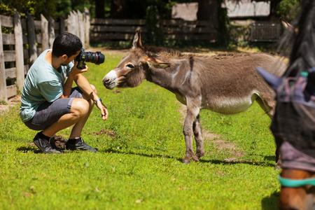 donkeys: Boy makes photos donkeys grazing Stock Photo