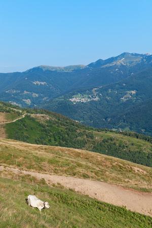 baro: Swiss mountain landscape, grazing cow