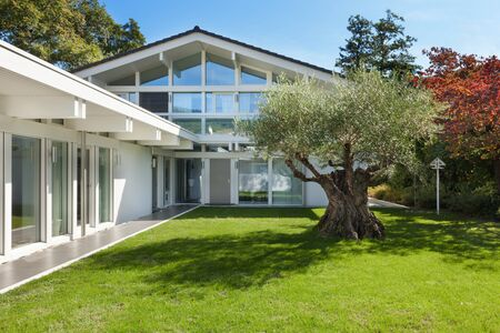 house windows: modern architecture, beautiful garden with old olive tree Stock Photo