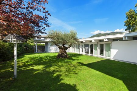 modern architecture: modern architecture, beautiful garden with old olive tree Stock Photo