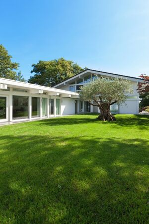 home and garden: modern architecture, beautiful garden with old olive tree Stock Photo
